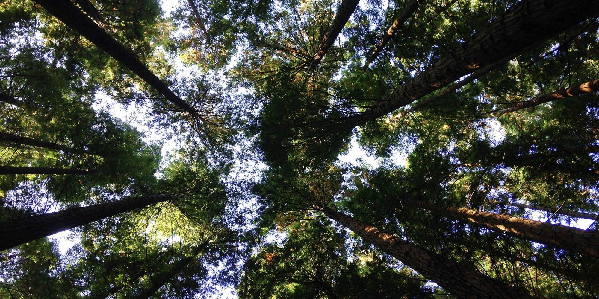 Inspiring trees on corporate purpose